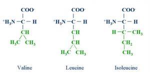 Η μοριακή δομή των 3ων βασικών αμινοξέων - BCAA